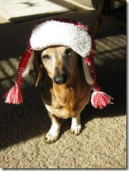 Neo in silly winter hat 003
